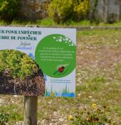 Le paillage remplace les phytosanitaires